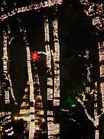 木々とクリスマスツリーのイルミネーション