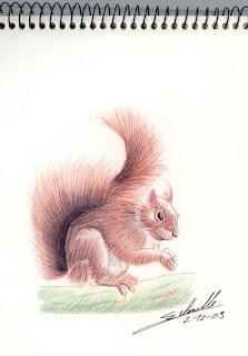écureuil, dessin au stylo bille
