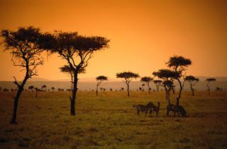 Nature d'Afrique