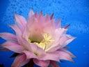 """Para cada Mulher aqui fica a minha lembrança: """"Uma flor""""."""