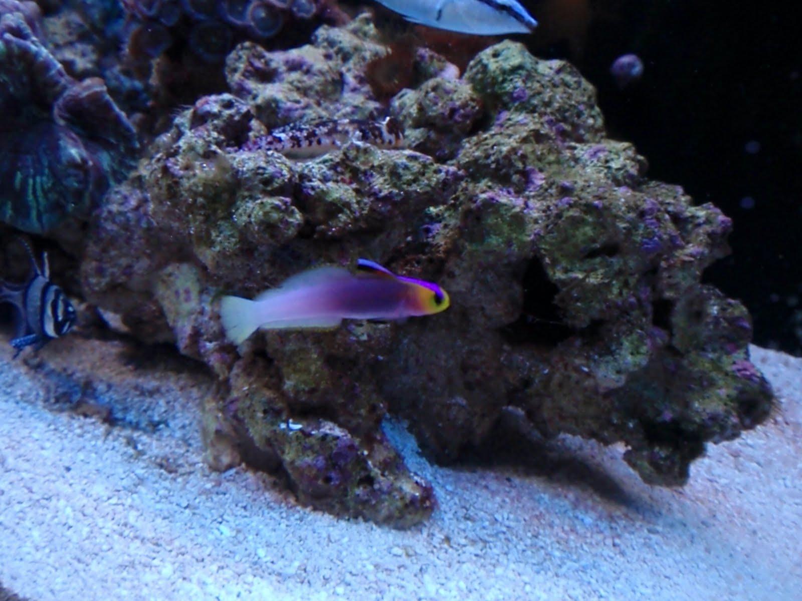 Trials and Tribulations of a Reef Aquarium October 2010