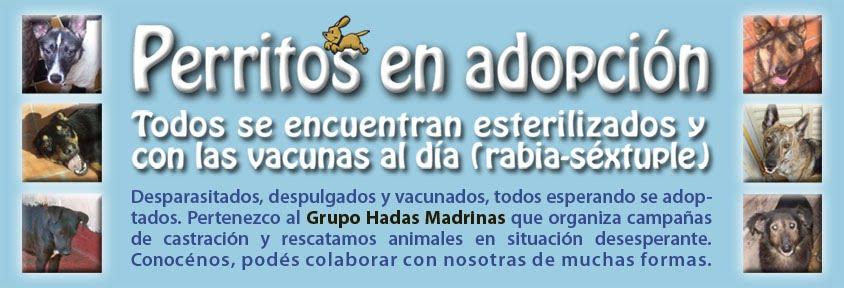 PERRITOS EN ADOPCION - Todos se encuentran esterilizados y con las vacunas al día (rabia-séxtuple)