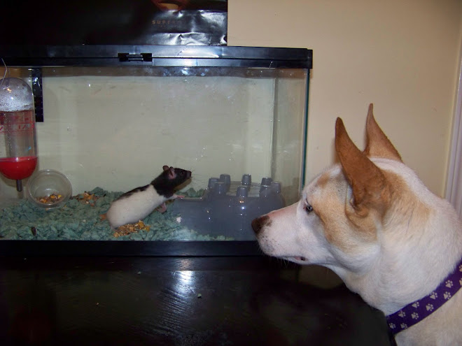 maggie meets lionel