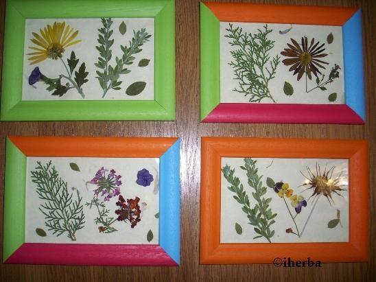 El mundo de las creaciones de iherba cuadros de flores secas - Plantas secas decoracion ...
