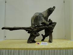 霹雳盆栽雅石协会观摩展览作品2010