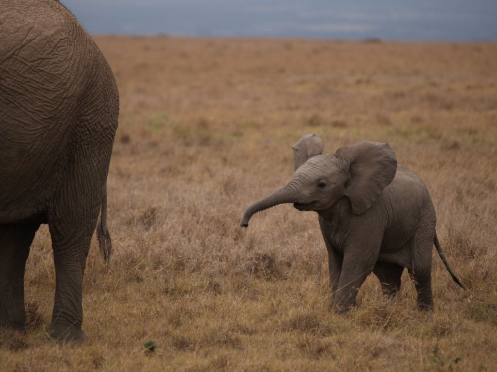 mr baby elephant