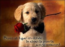 """""""Amor"""""""