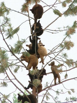 Tree Full of Bears