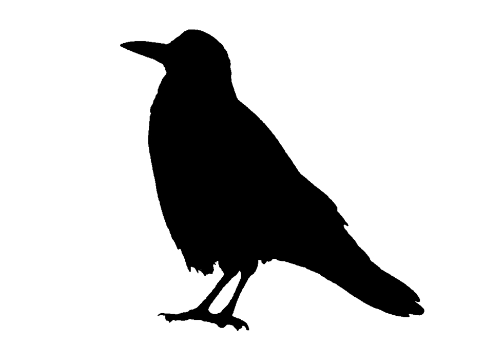This is my newest crow stencil I love stencils and they are so easy to