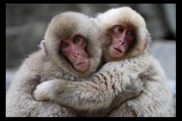 Two monkeys hugging drawing - photo#3