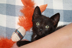 """Xuxu, a """"outra"""" gata preta..."""