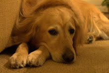 Our Golden Retriever, Riley