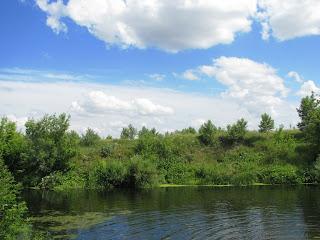 река летом