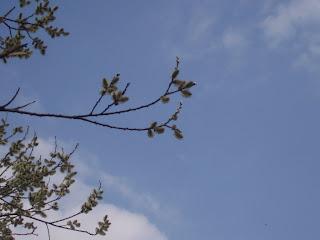 нежная весна