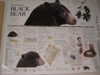 NJ Black Bear