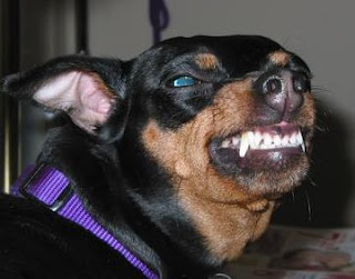 Image Result For Can Dogs Attack