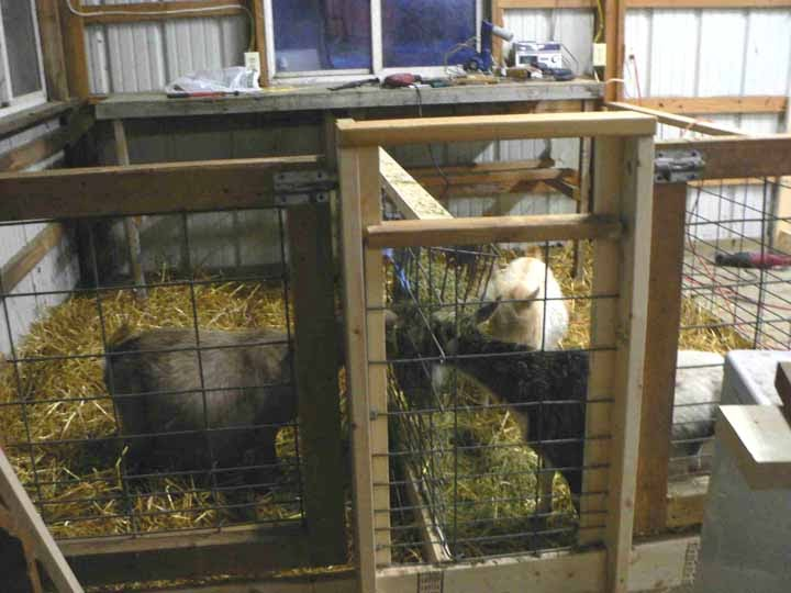Antiquity Oaks Update On New Kidding Pens