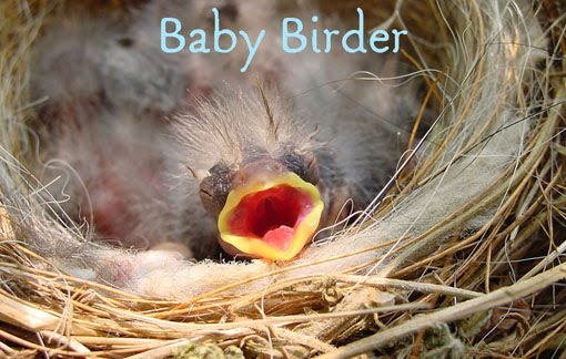 Baby Birder