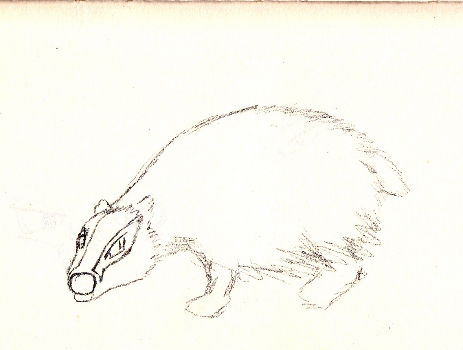 how to draw a so cute badger