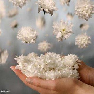 Flores regateiras para vocês