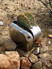 Toasted Cactus