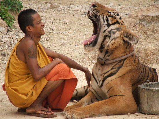 viajes-tailandia-reino-tigres-02