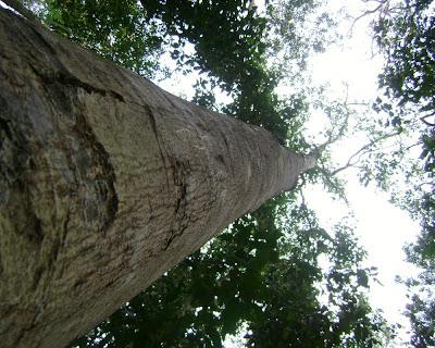 lawachhara rain forest, moulovibazar,