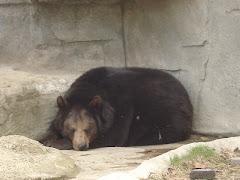 ...and bears