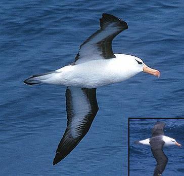 Top 10 de: De todo Albatros