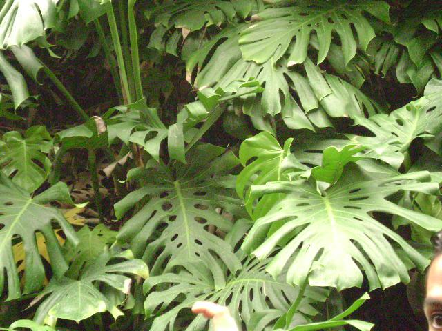 Practica jardin botanico unam for Jardin botanico medicinal