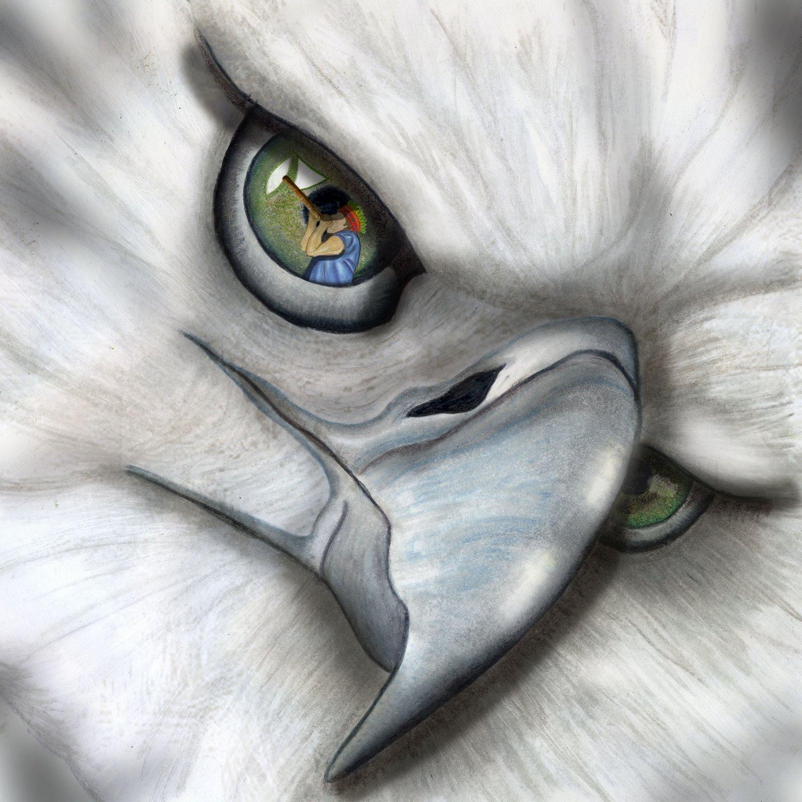 arpia 2 f zool aguila poderosa de plumaje blanco y plomizo ...