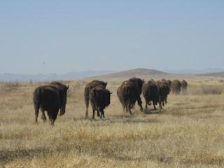 Flora y fauna janos chihuahua reserva de la biosfera ANP