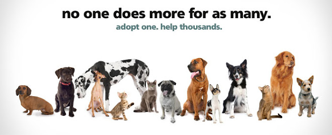 The Official Blog of the Humane Society of Utah - UtahHumane.org