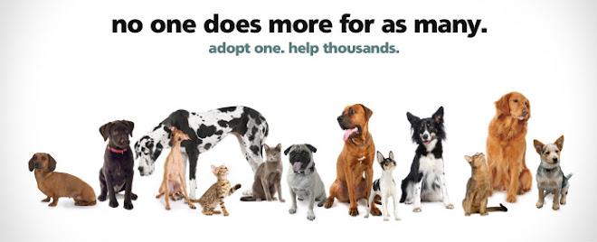 The Official Blog of the Humane Society of Utah - UtahHumane.org