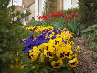 que faire ce mois dans mon jardin annetois planter des bulbes. Black Bedroom Furniture Sets. Home Design Ideas