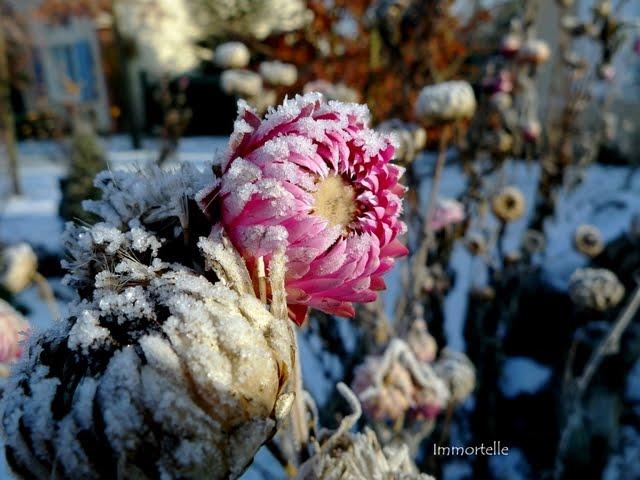 Que faire ce mois dans mon jardin annetois que faire en janvier dans son jardin - Que faire au jardin en janvier ...