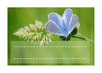 étiquette enfant à imprimer insecte: le papillon