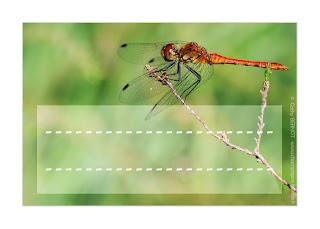 2tiquette enfant libellule macrophotographie