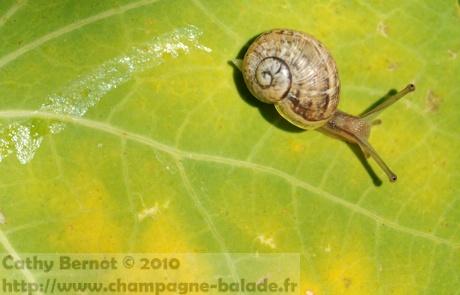 Travailler sur le thème des escargots au cycle 1