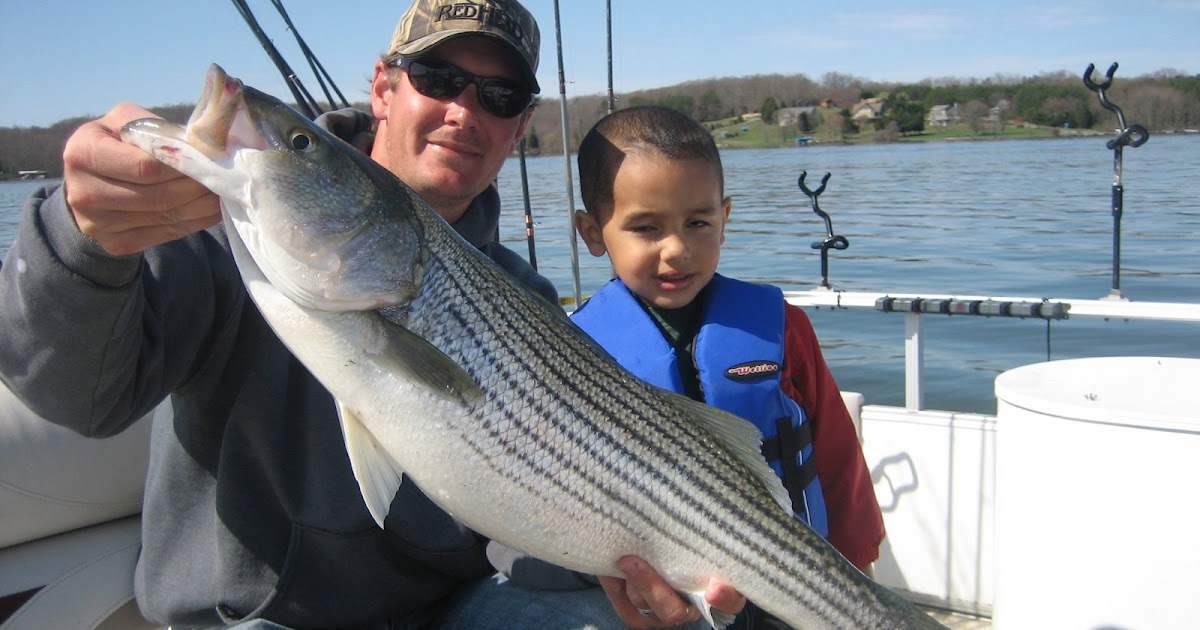 Lake anna striper guide journal micheal larry and mark for Lake anna fishing