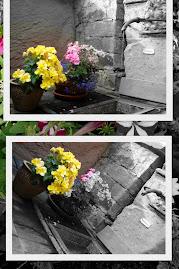 Flores na Alemanha