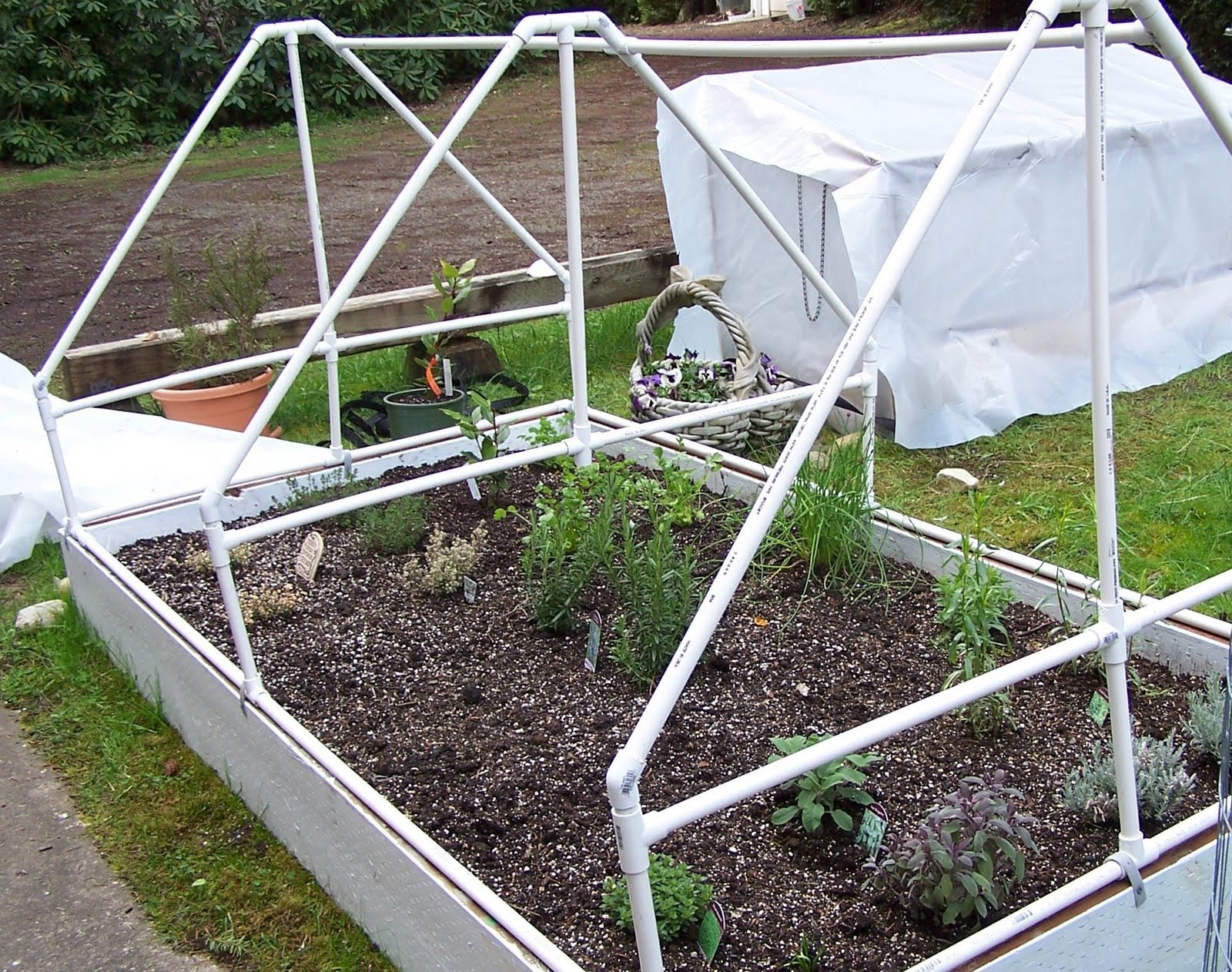 At Home On Paradise Cove Raised Bed And Container Garden