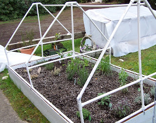 At Home On Paradise Cove: Raised Bed and Container Garden...