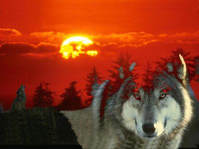Personalizar avatars y firmas. Burras+y+lobos-6