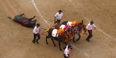 Catalunya se pregunta si el dolor d los toros es ético[PROU] Arras-1A