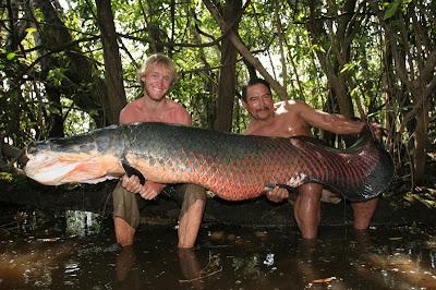 Ikan Raksasa Berwajah Aneh dan Langka - Free Download M