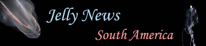 Jelly News South America
