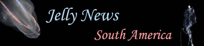 Jelly News South America
