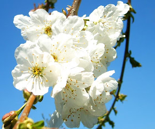 Florais de Bach auxiliam no crescimento e tratamento de plantas