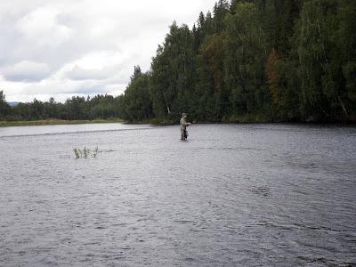 Flugfiske Norge (Renaälven, Glomma, Femundsälven, Sondre Osa etc.)  09